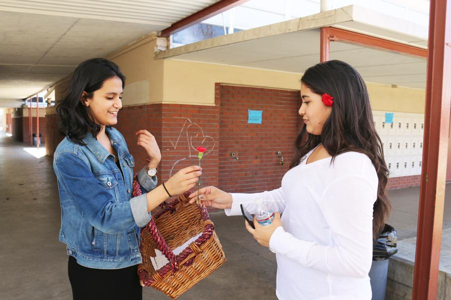 (TARAH JOHNSON/EYE OF THE TIGER) Junior Duha Khalifeh hands a rose to a student last week for International Women's Day.